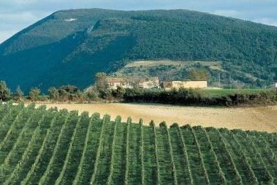 Vini delle Marche: vitigni