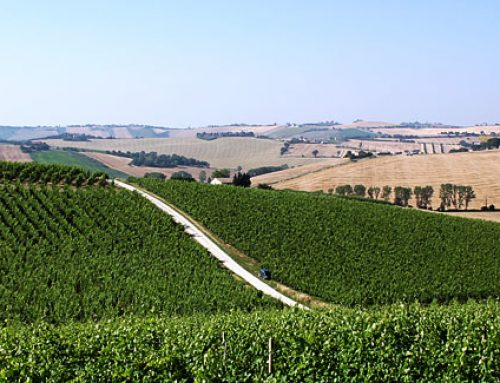 WINES OF THE MARCHE