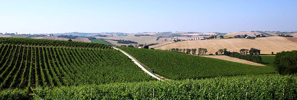 wine-marche