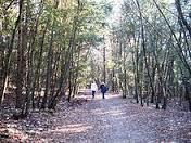 Flora del Parco del Conero: il rimboschimento
