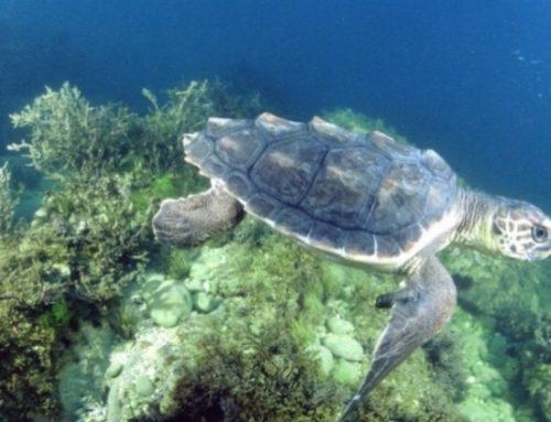 Numana, la città delle tartarughe